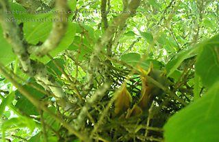 Mockingbirds in fig tree homeschoolersavvy typepad com