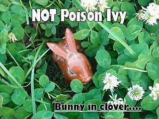 Bunny in clover