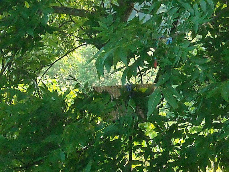 Basket in tree
