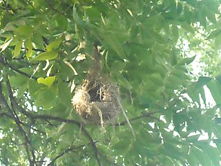Design flaw nest