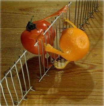 Food art tomato, orange