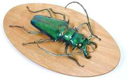 Beetle_sculptures