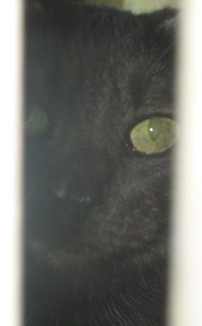 Interested_onlooker_cat